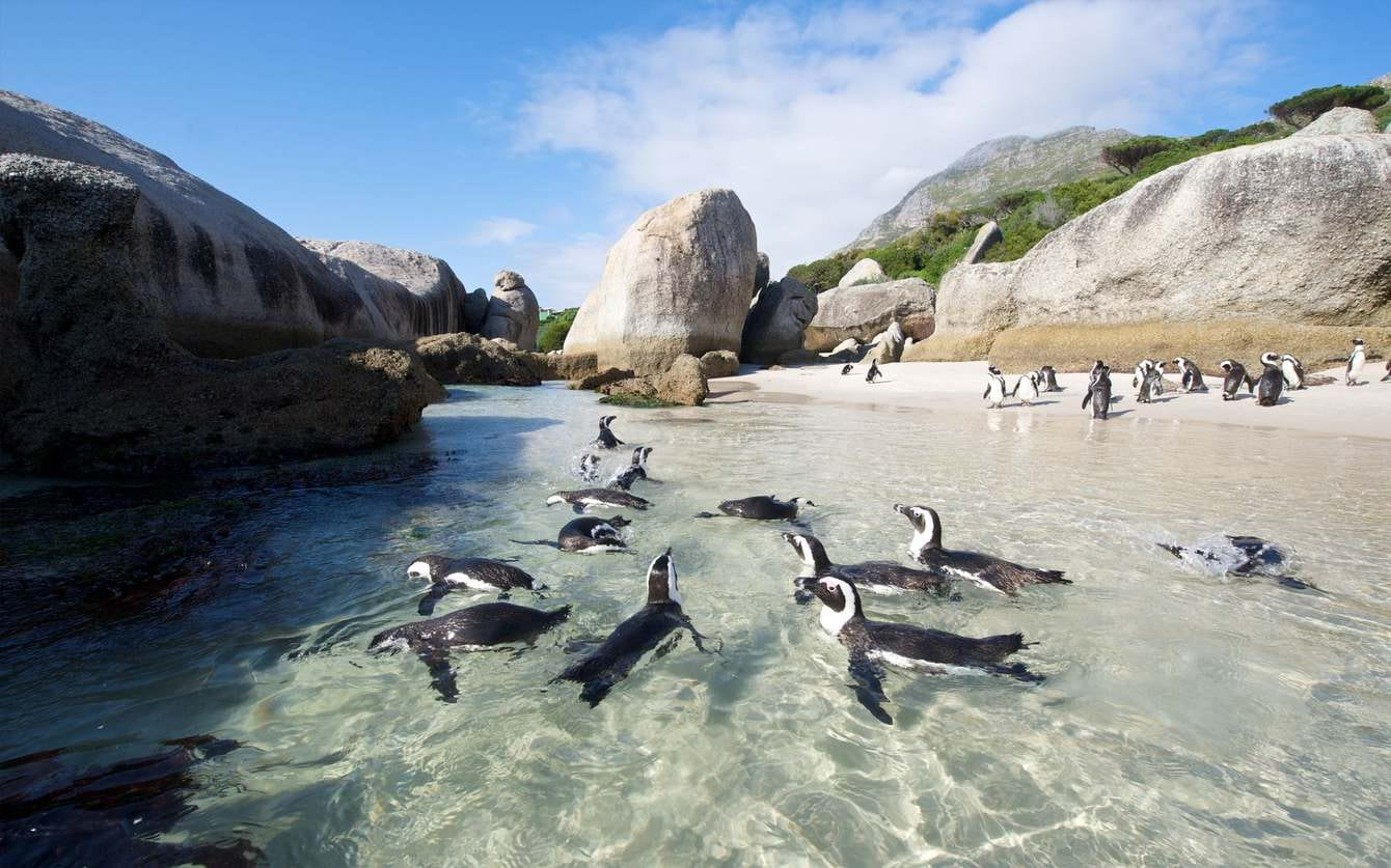 Boulders Beach and the Penquins