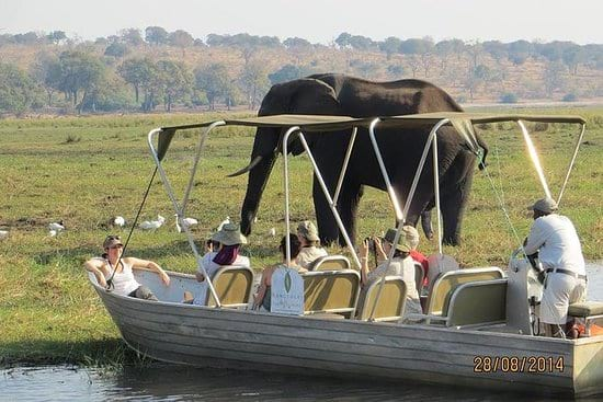 A Day Trip to Chobe and Boat Viewing the Game