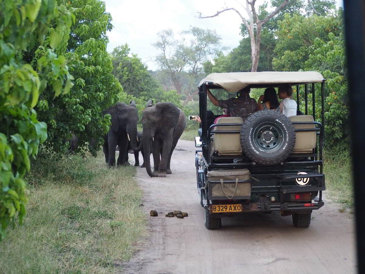 Open Safari Viewing in Chobe Reserve